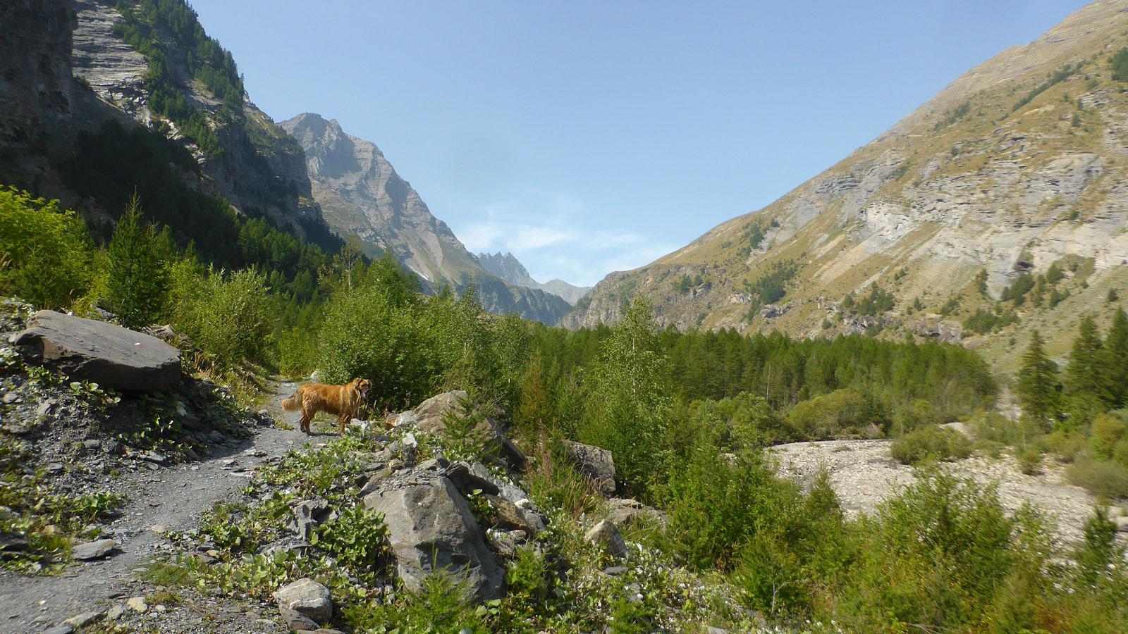 Vue sur la vallée du Fournel entre deux passage boisé