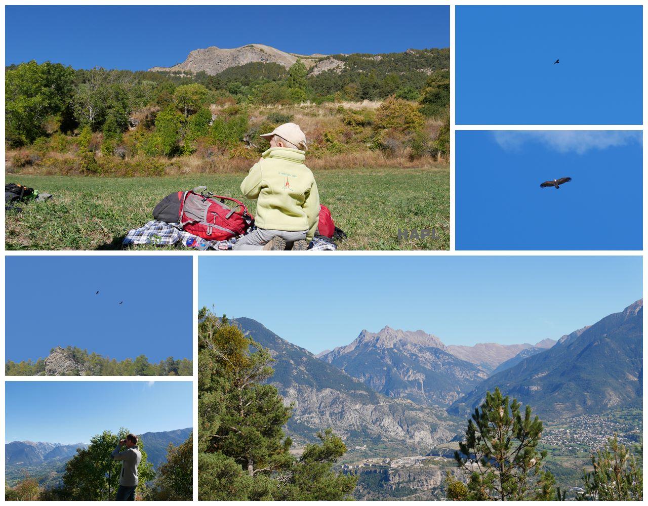 Comptage LPO Gypaète réotier - Hautes-Alpes